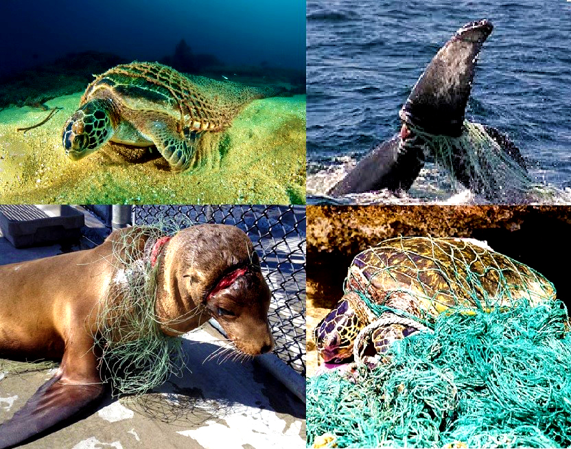 plastic pollution, marine pollution, water pollution, plastic waste