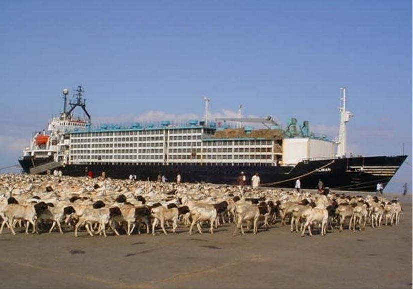 somalia livestock, saudi arabia somalia, somalia saudi trade dispute