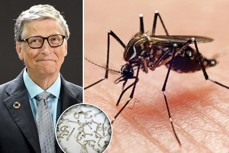 bill gates mosquito, bill gates